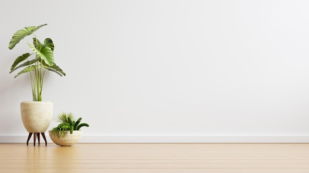 Habitación vacía de pared blanca con plantas en un piso, render 3d