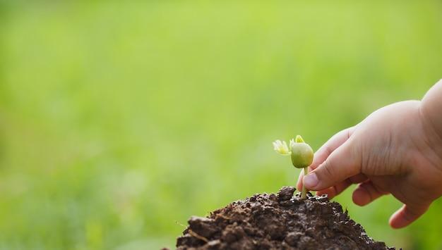 Haciendo rse mediante la plantación de árboles, concepto de rse y plantación empresarial de árboles jóvenes.