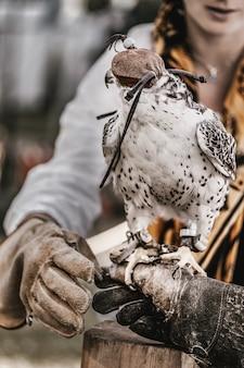 Halcón de caza con una capucha en la cabeza se sienta en una mano enguantada