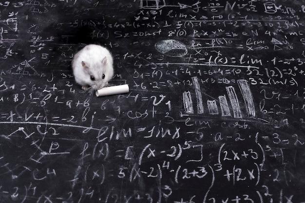 Hámster y ciencia