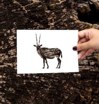 Hand hold gemsbok oryx paper carving