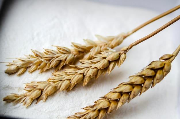 Harina de cereal de trigo y brotes de cereales de cerca