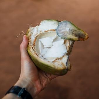 Harina de coco verde en mano en un marco cuadrado