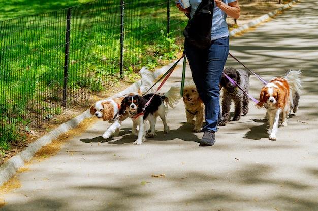 Hay gente paseando perros en la carretera.