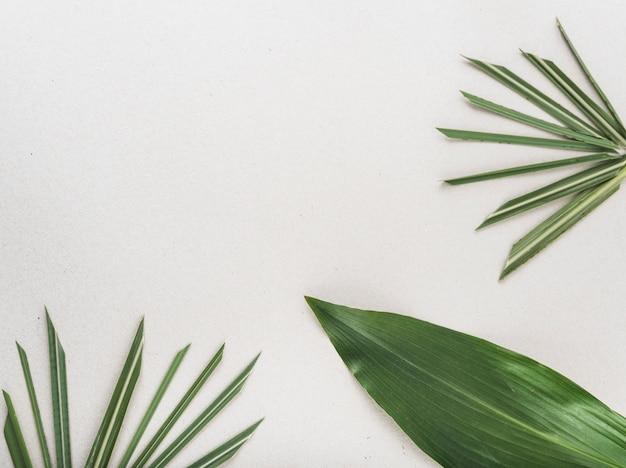 Hay un montón de hojas de plantas tropicales