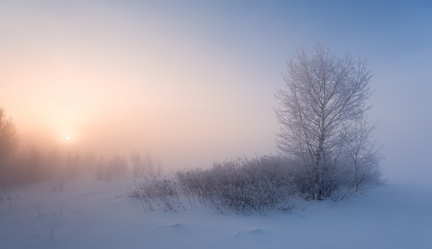 Helada mañana de invierno