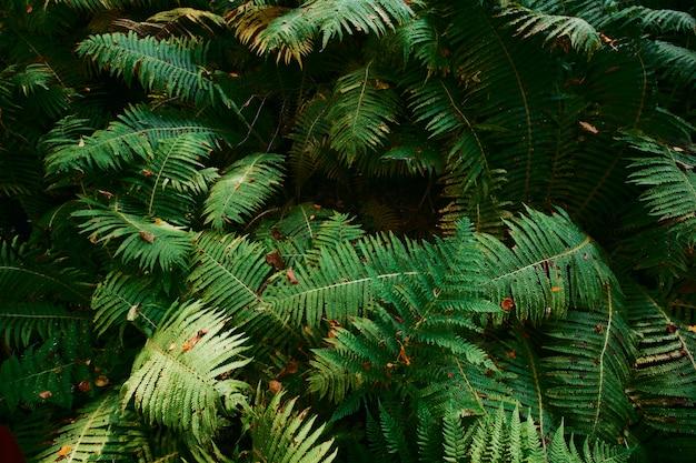 Helecho grandes hojas