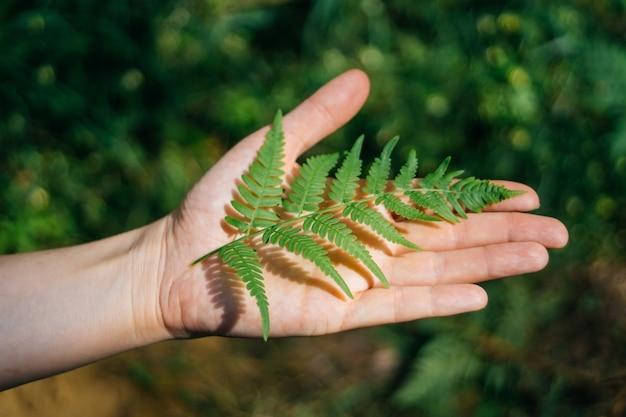 Helecho en mano hoja de palma en la naturaleza
