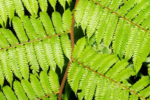 Helecho verde deja closeup