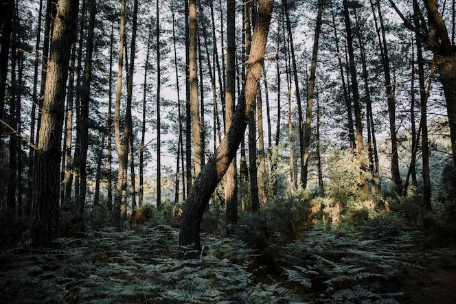 Helechos y árboles que crecen en el bosque durante el día soleado