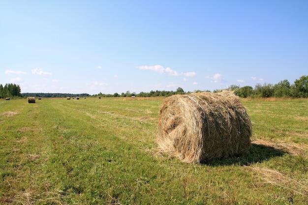 Heno en el campo