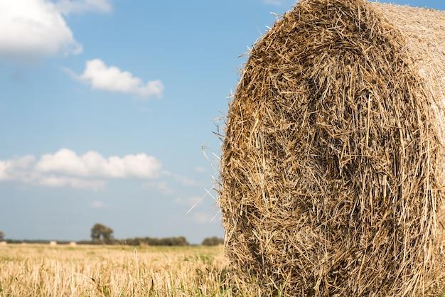 Heno en pacas redondas se encuentra en el campo closeup heno cosechado sobre un fondo de campos segados verdes y cielo azul con espacio de copia