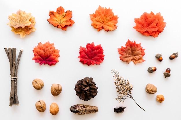 Herbario otoñal de detalles de árboles de colores