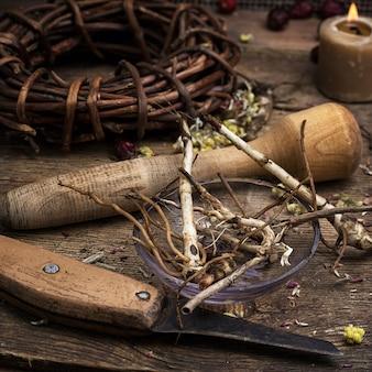 Herbario de raíz de regaliz medicinal seco.