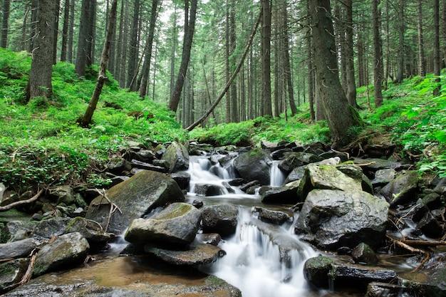 Hermosa cascada de bosque profundo