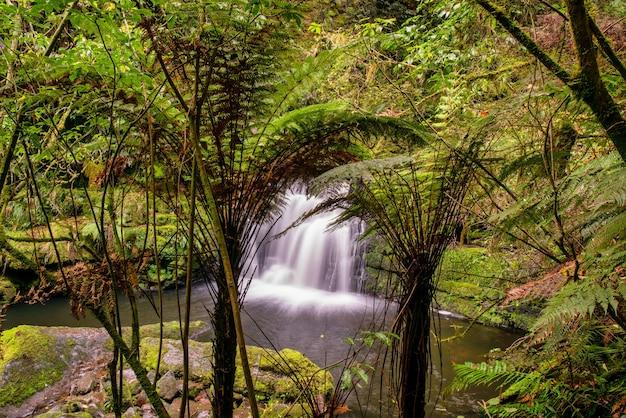Hermosa cascada en lo profundo de la selva tropical