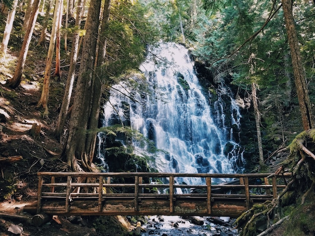 Hermosa cascada y un pequeño puente de madera.