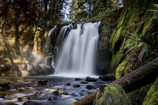 Hermosa cascada rodeada de árboles y plantas en el bosque