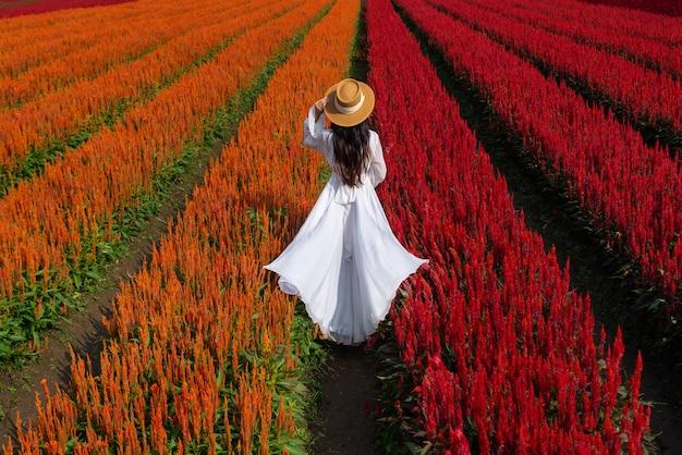 Hermosa chica en vestido blanco de viaje en los campos de flores de celosia, chiang mai.