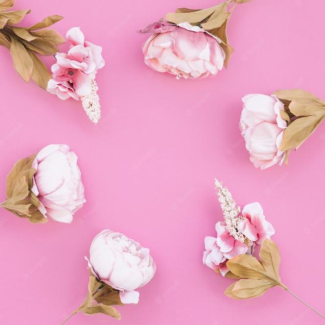 Hermosa composición con rosas sobre fondo rosa