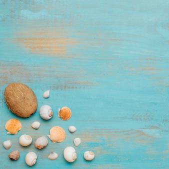 Hermosa composición de conchas marinas.
