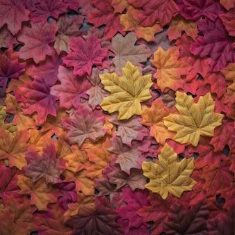 Hermosa composición de hojas de arce otoñal densamente dispersas