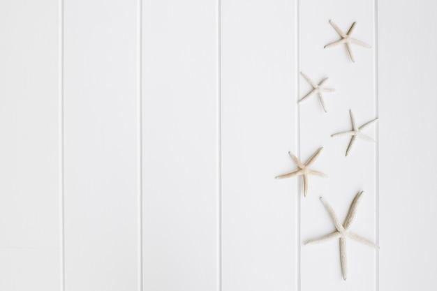 Hermosa estrella de mar sobre el bonito fondo de madera blanca