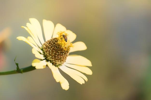 Hermosa flor con abeja. flor en el jardín.