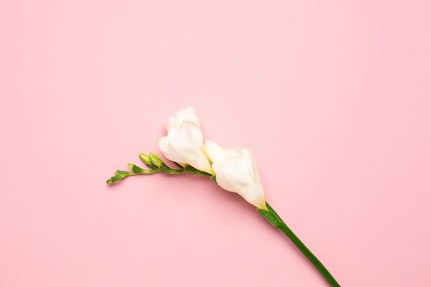 Hermosa flor blanca con espacio de copia sobre fondo rosa