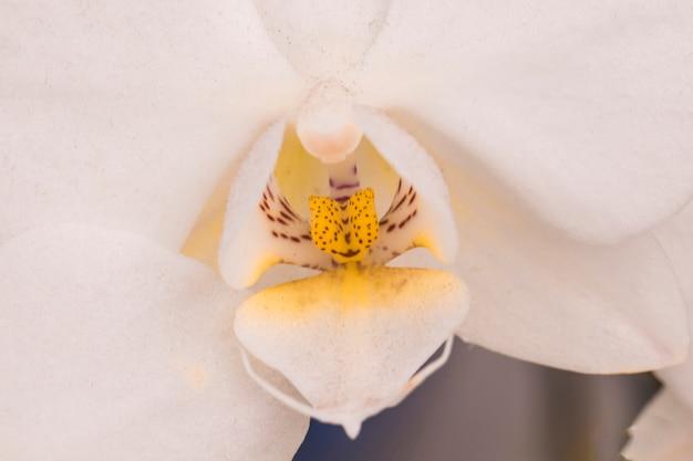 Hermosa flor blanca con pistilo amarillo.