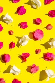 Hermosa flor de buganvilla roja y blanca sobre fondo amarillo.