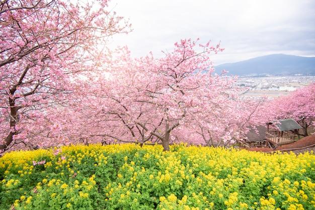 Hermosa flor de cerezo en el parque