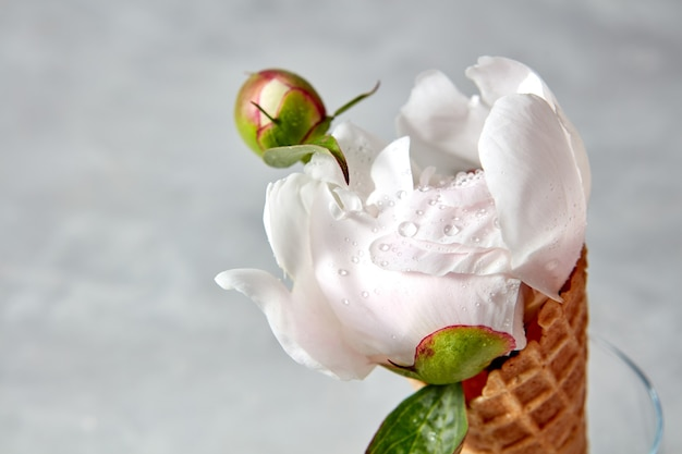 Hermosa flor en un cuerno de oblea sobre un fondo de hormigón gris