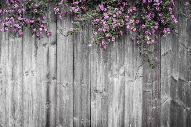 Hermosa flor floral violeta primavera verano