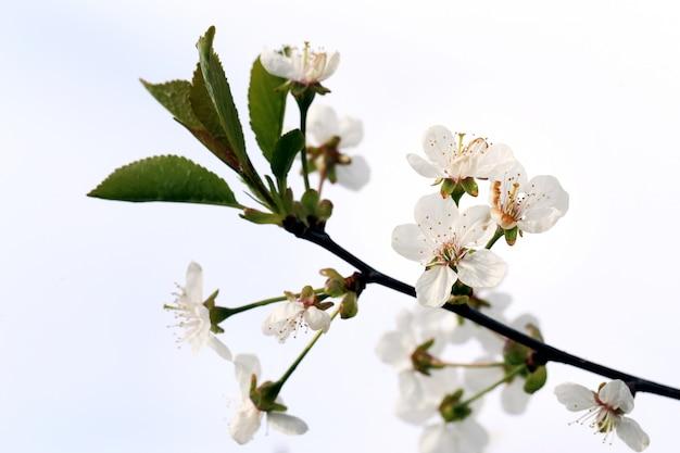 Hermosa flor floreciente