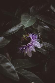 Hermosa flor lila rodeada de vegetación