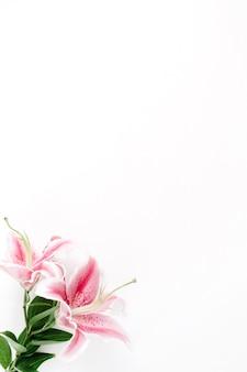 Hermosa flor de lirio rosa sobre blanco.