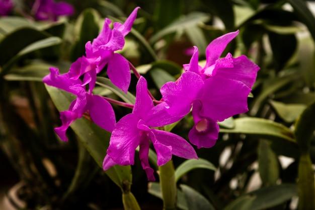Hermosa flor morada con fondo borroso