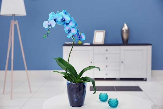 Hermosa flor de orquídea azul sobre la mesa en la habitación moderna