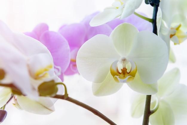 Hermosa flor de orquídea en brunch verde de cerca