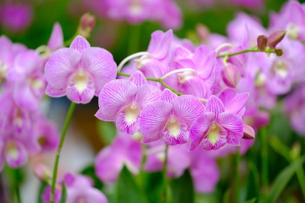 Hermosa flor de orquídea en el jardín de orquídeas