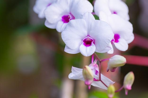Hermosa flor de orquídea con natural
