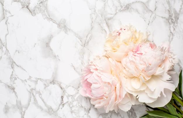 Hermosa flor de peonía blanca sobre superficie de mármol con espacio de copia