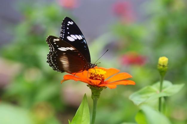 Hermosa flor de primavera con mariposa