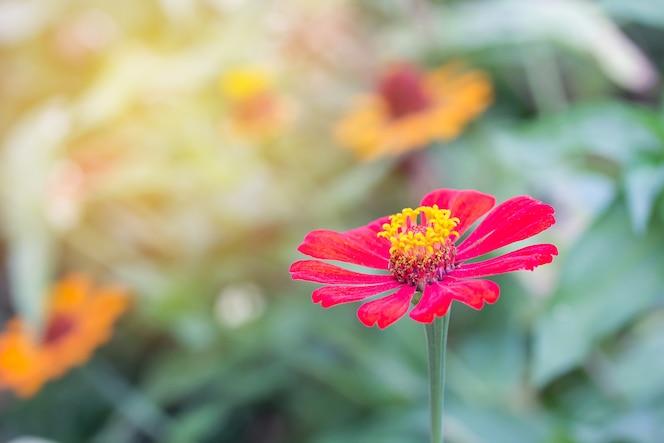 Hermosa flor roja con luz solar