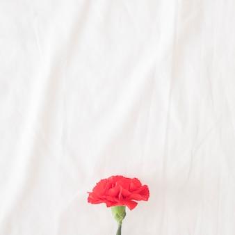 Hermosa flor roja en tallo verde