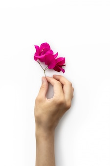 Hermosa flor rosa en mano de mujer aislada sobre fondo blanco