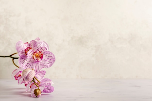 Hermosa flor rosa spa