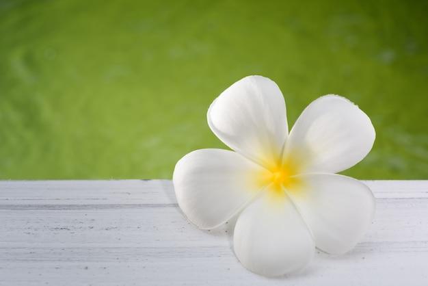 Hermosa flor de spa frangipani en tablón de madera con fondo de estanque verde suave