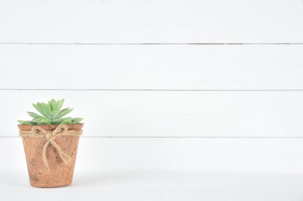 Hermosa flor verde en una olla sobre fondo blanco de madera